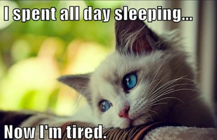 funny memes about being tired