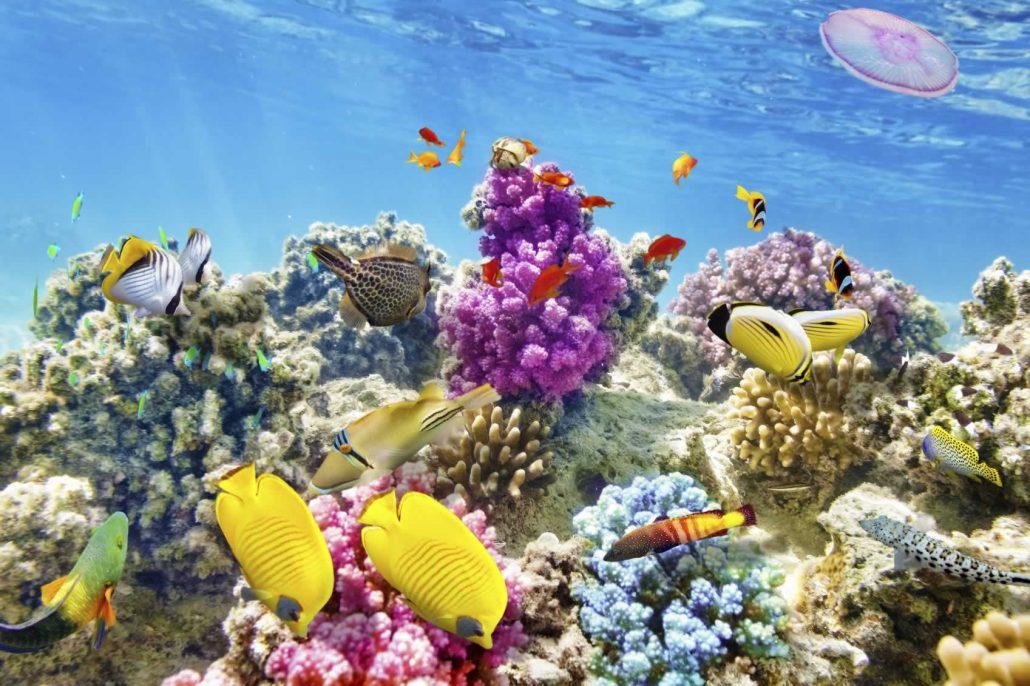 Sombrero Reef, Marathon
